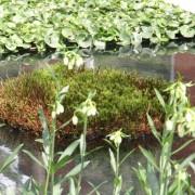Moosinsel in flachem Wasser