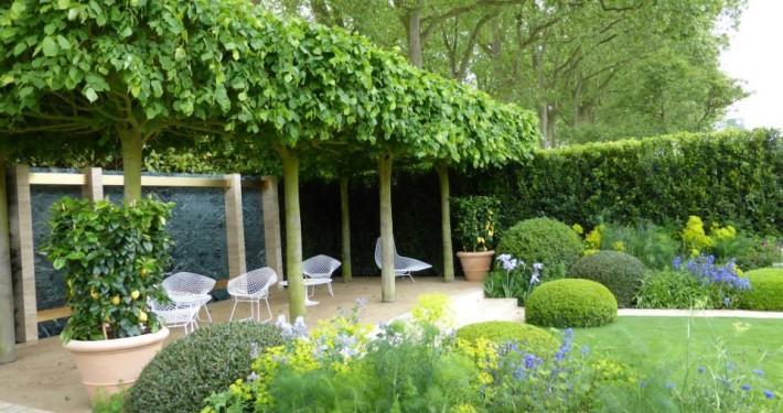 Linden in Kastenform bieten Schatten im Garten