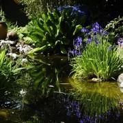 Kleiner Traumgarten mit Wasser