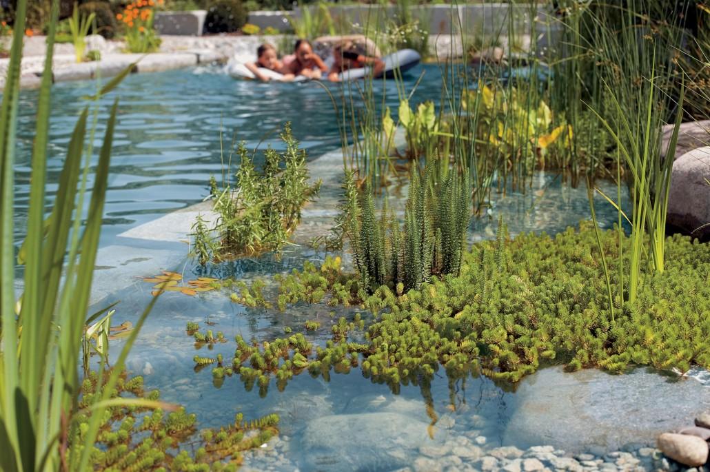 Schwimmteiche zinsser gartengestaltung schwimmteiche for Schwimmteich natur