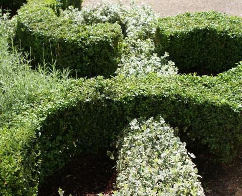buchsbaum-formschnitt-knotengarten-21