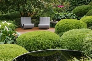 gesunder Buchsbaum muss gepflegt werden durch Schnitt, Düngung und Pflanzenschutz hier mit Wasserbecken