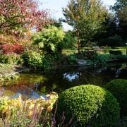 Wasserspiegelung am Teich mit Cornus controversa