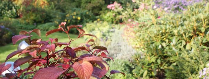 cottage-garden-herbst-6