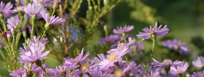 cottage-garden-herbst-7