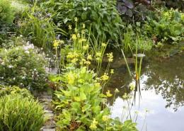 Gartenteich mit Uferzone, der Teichrand ist mit Steinen stabilisiert