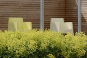 moderne Möbel, Frauenmantel und Sichtschutzwand