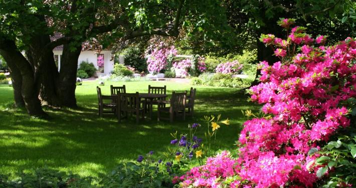 Sitzplatz im Schatten unter Bäumen und die Rhododendron und Azaleen blühen