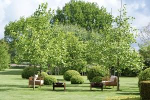 Gartenkonzepte mit großen Pflanzen, Solitärs und Gartenbonsais für Uelzen, Lüneburg, Gifhorn, Celle und Muster