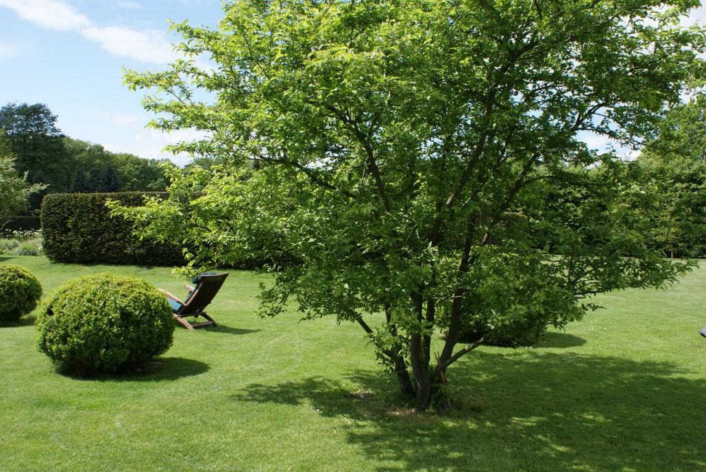 richtig gro e pflanzen zinsser gartengestaltung schwimmteiche und swimmingpools. Black Bedroom Furniture Sets. Home Design Ideas