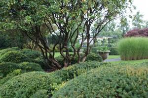 große pflanzen sind noch verpflanzbar