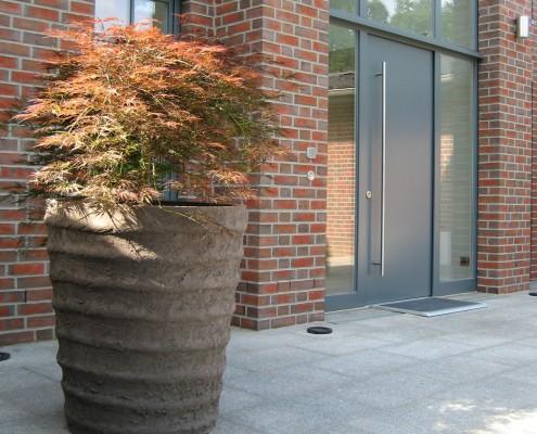 Acer japonicum - Schlitzahorn als Kübelpflanze mit Vierkant-Topf