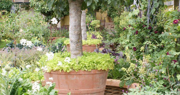 Solitare Im Topf Zinsser Gartengestaltung Schwimmteiche Und