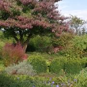 Herbstfärbung im Garten Cottage