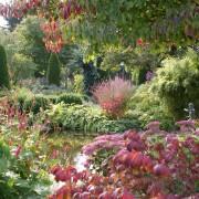Der Herbstliche Garten ist mit der Laubfärbung und der späten Blüte ein farbenfrohes Abwinken des Gartenjahrs