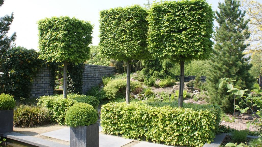 Hochstammspaliere zinsser gartengestaltung schwimmteiche und swimmingpools - Baum fur vorgarten ...