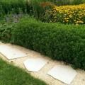 polygonale, formwilde Trittplatten im Kiesweg