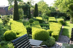 Buchsbaum-Parterre flächig gepflanzt