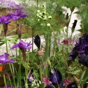 Staudenvielfalt im Blumenbeet