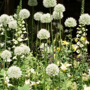 Kugellauch und Fingerhut, Akelei und Glockenblumen