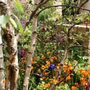 Als professioneller Landschaftsgärtner sind wir perfekt in der Gartenpflege