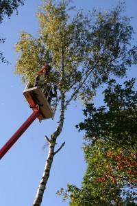 Bäume auslichten mit Hebebühne