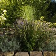 Rosen und Lavendel mit Trockenmauer