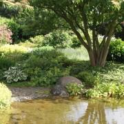 Gartenteich mit Hartriegel am Teichrand mit Wwasserspiegelung