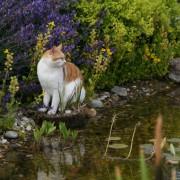 Idylle am Teichrand mit der Katze
