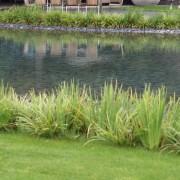 Flache Teiche mit Kieselsteinen können ganz leicht chloriert werden, das Wasser bleibt dann klar