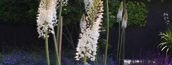 Der Weiße Garten ist kein seltenes Gestaltungsthema