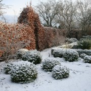 Die Buchenhecke hält das Laub den ganzen Winter durch - ein guter Sichtschutz