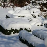 Struktur und gute Proportionen durch immergrüne Gehölze im Winter