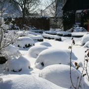 Im Winter sieht der Cottage Garten toll aus, Buchsbaum, Gräser und andere Immergrüne geben die Struktur